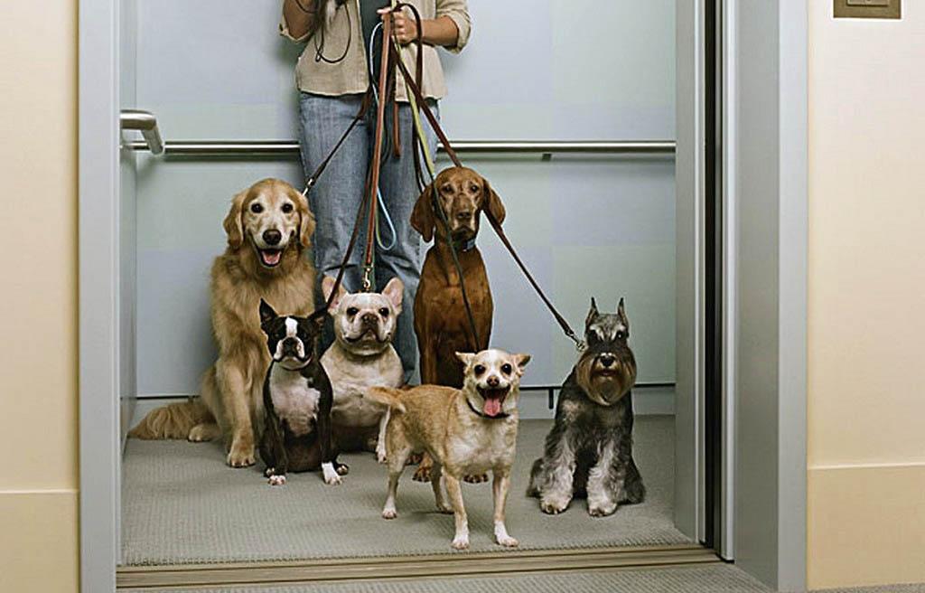 Перевозка животных в лифте - как быть
